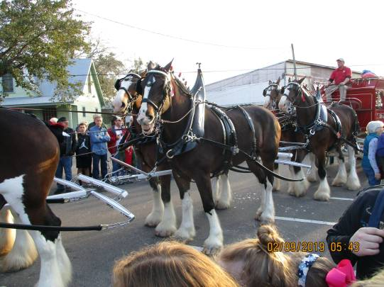ClydesdaleHorses