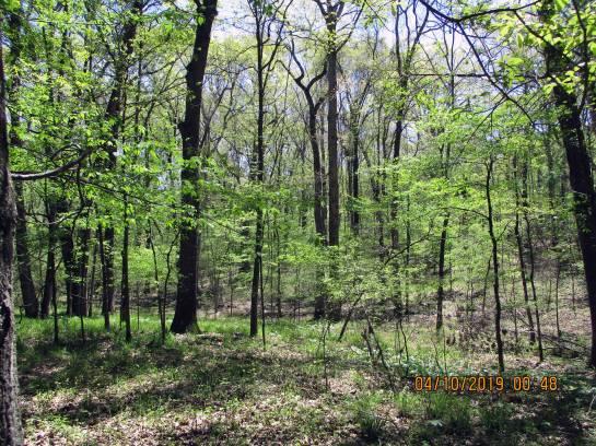 UplandForest